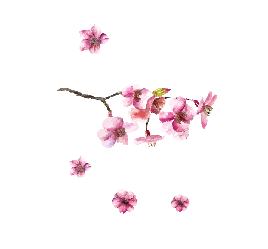 Petal drawing cherry blossom. Japanese art hand painted