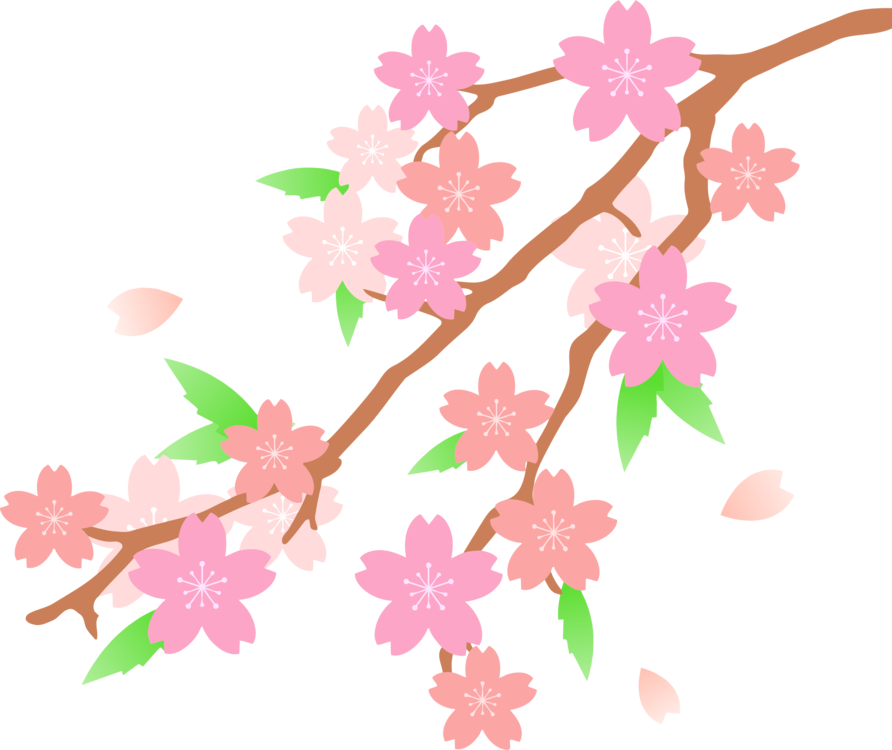 Blossom drawing. Cherry flower free commercial