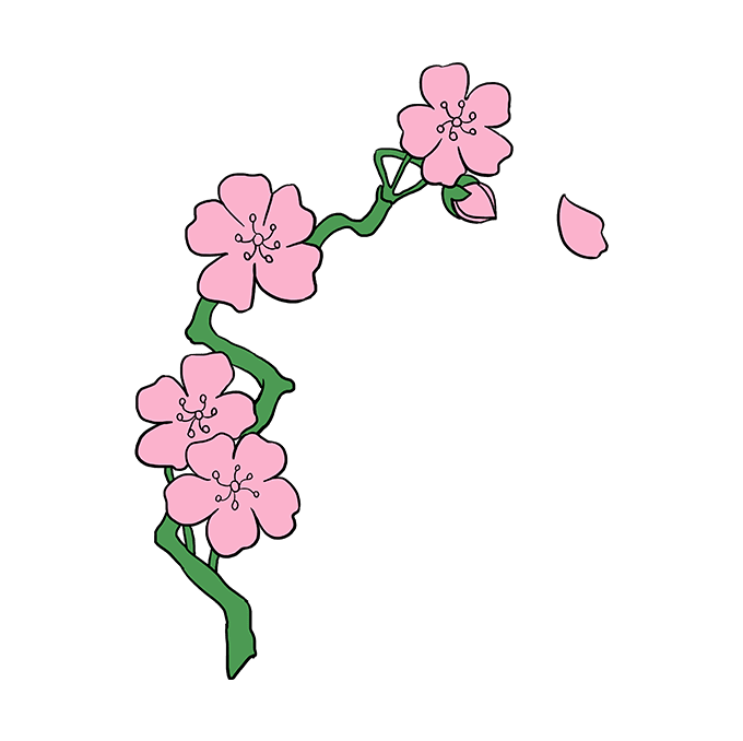 How to draw blossoms. Bud drawing cherry blossom svg freeuse