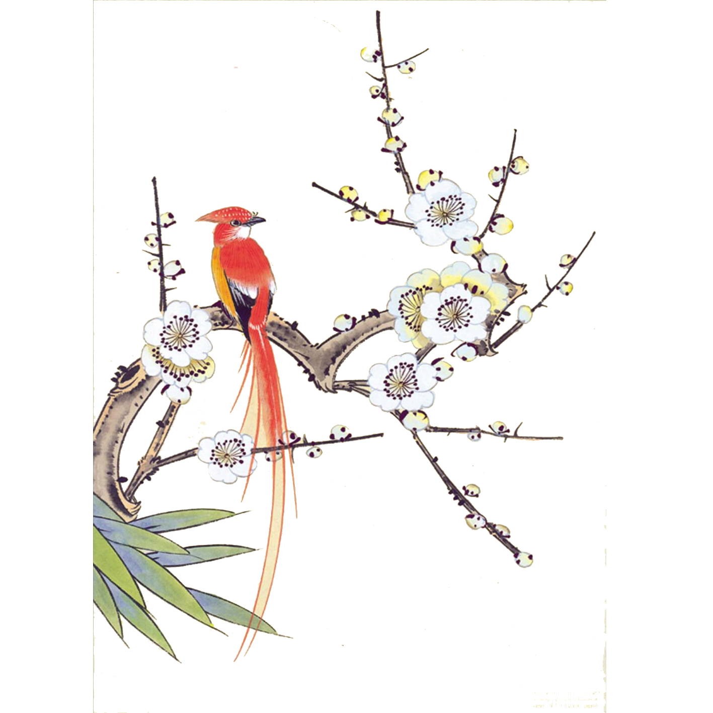 Blossom drawing bird. Chinese painting gongbi and