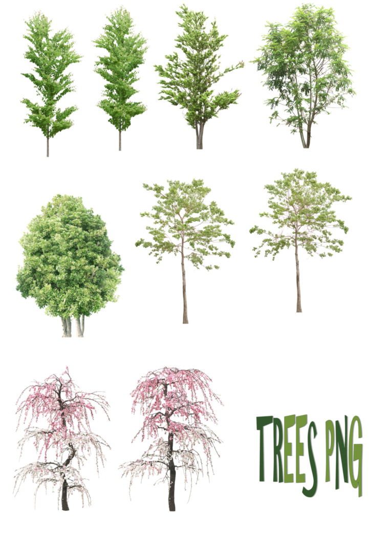 Pine drawing landscape. Trees png by mysticmorning