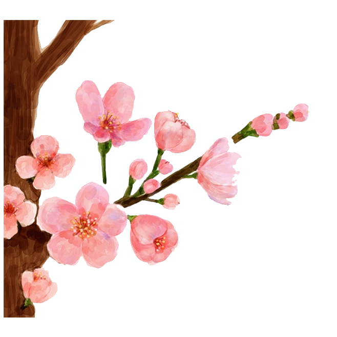 Blossom drawing watercolor. Cherry painting spring peach