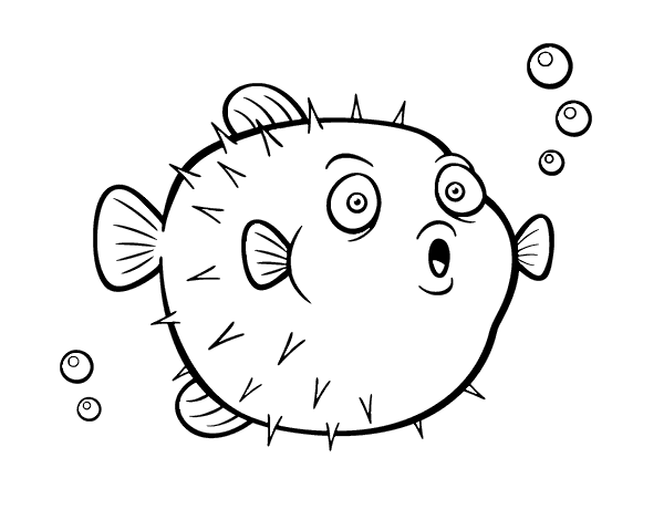 Blowfish drawing. Pufferfish coloring page coloringcrew