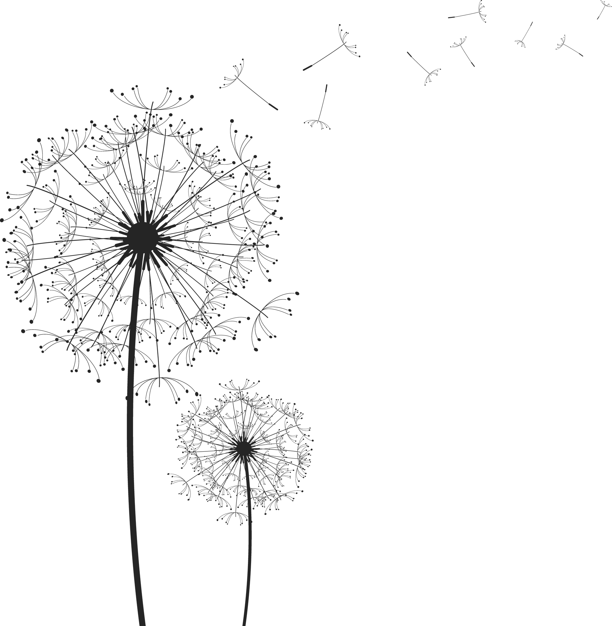 Blowing dandelion png. Silhouette at getdrawings com