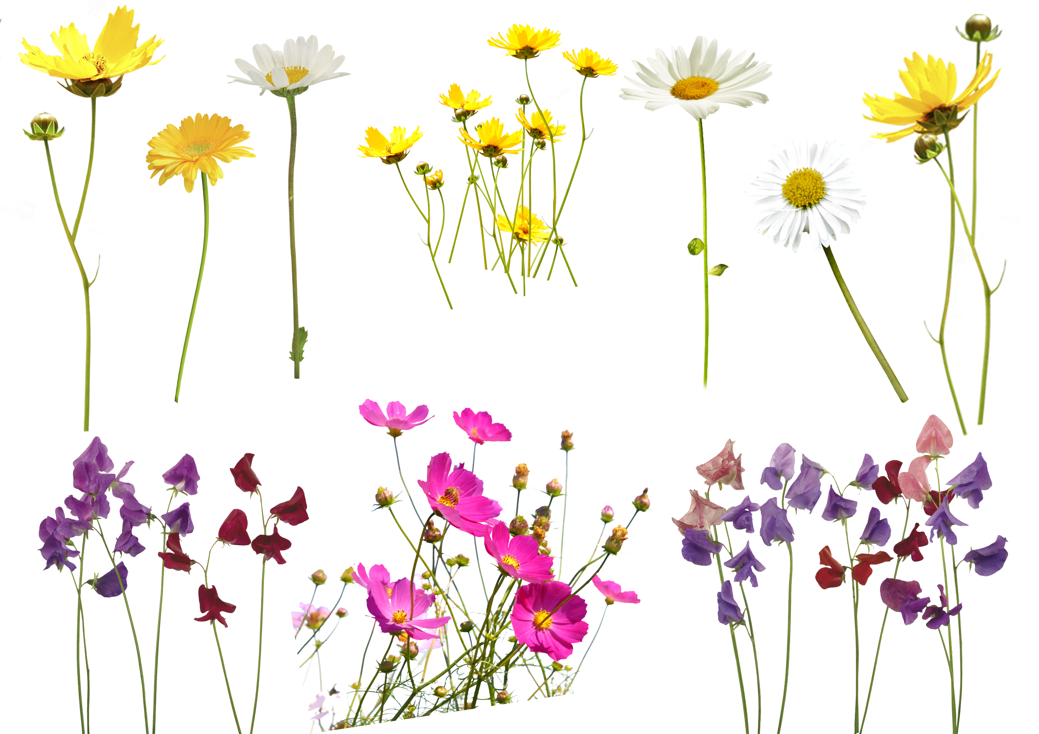 Bokeh vector foreground. Free flower photo overlay