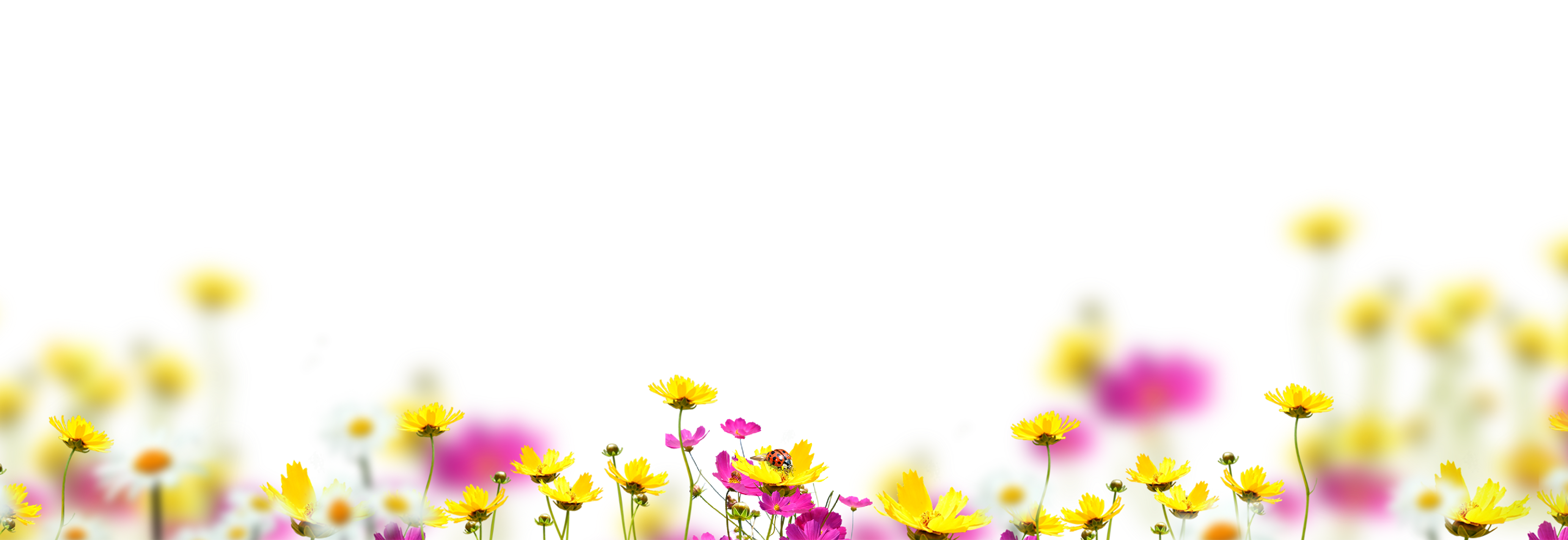 Blowing glitter png. Free flower overlay photoshop