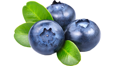 Blue berry png. Blueberries images free download