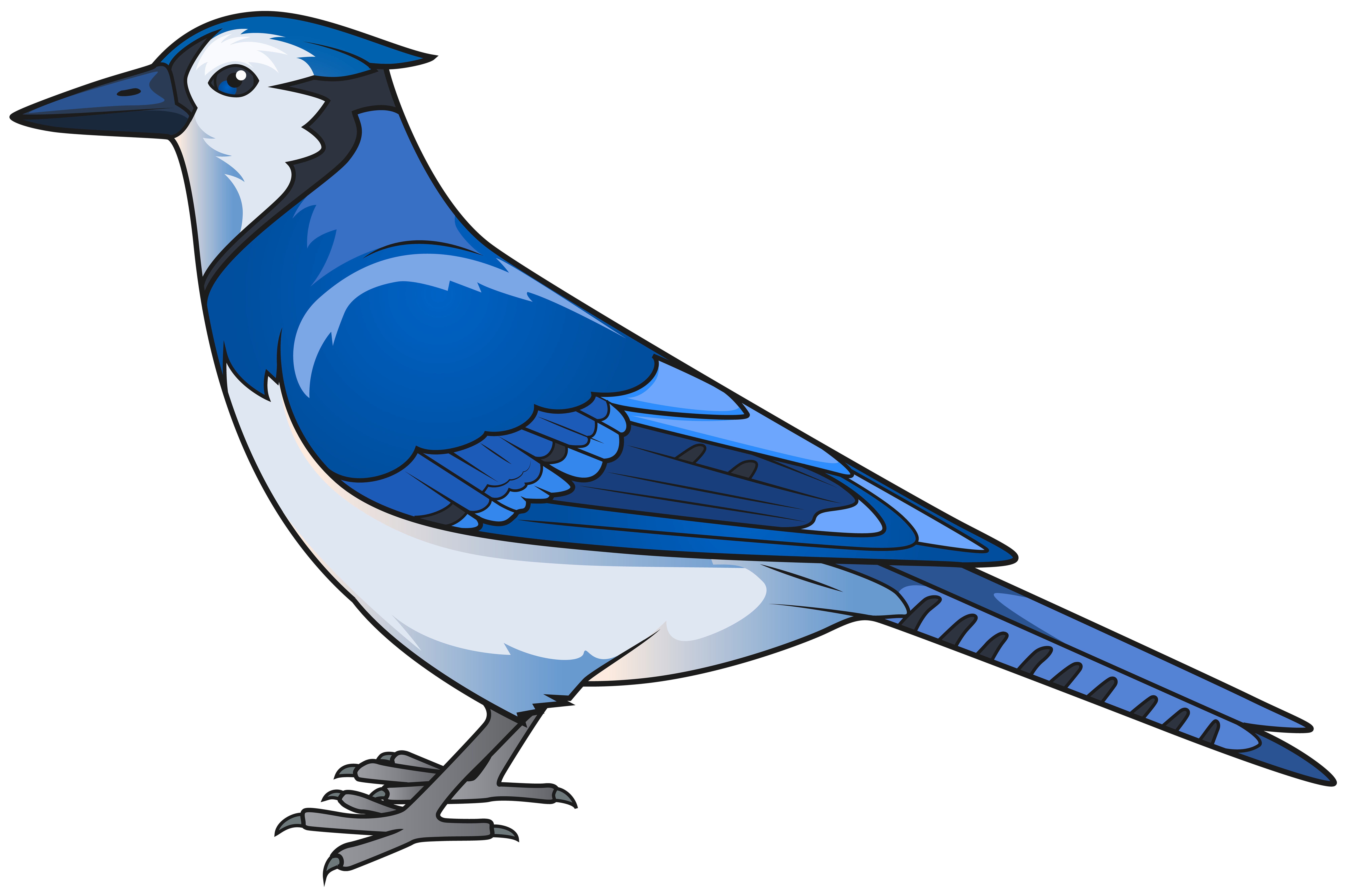 blue jay png
