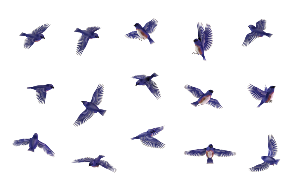 Bluejay drawing in flight. Blue birds png image