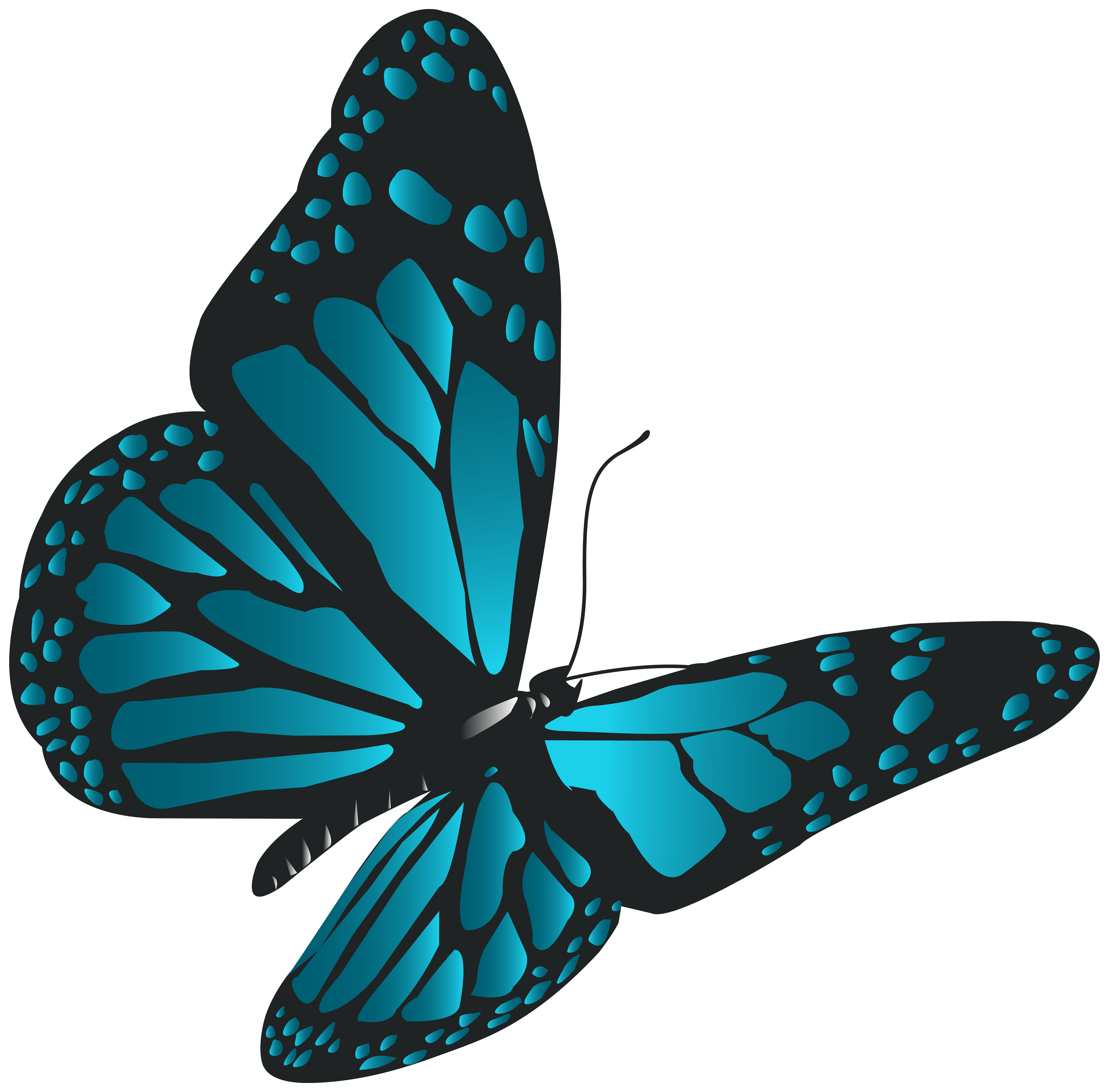 Butterfly png art gallery. Blue clip vector transparent download