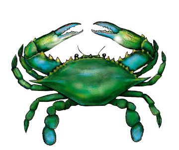 Transparent crab female. Blue seafood products buy