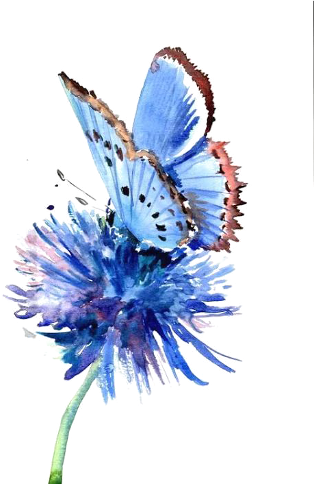 Blue drawing watercolor. Butterfly painting flower art