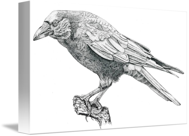 Drawing spaceships pen and ink. Stipple crow by dulce