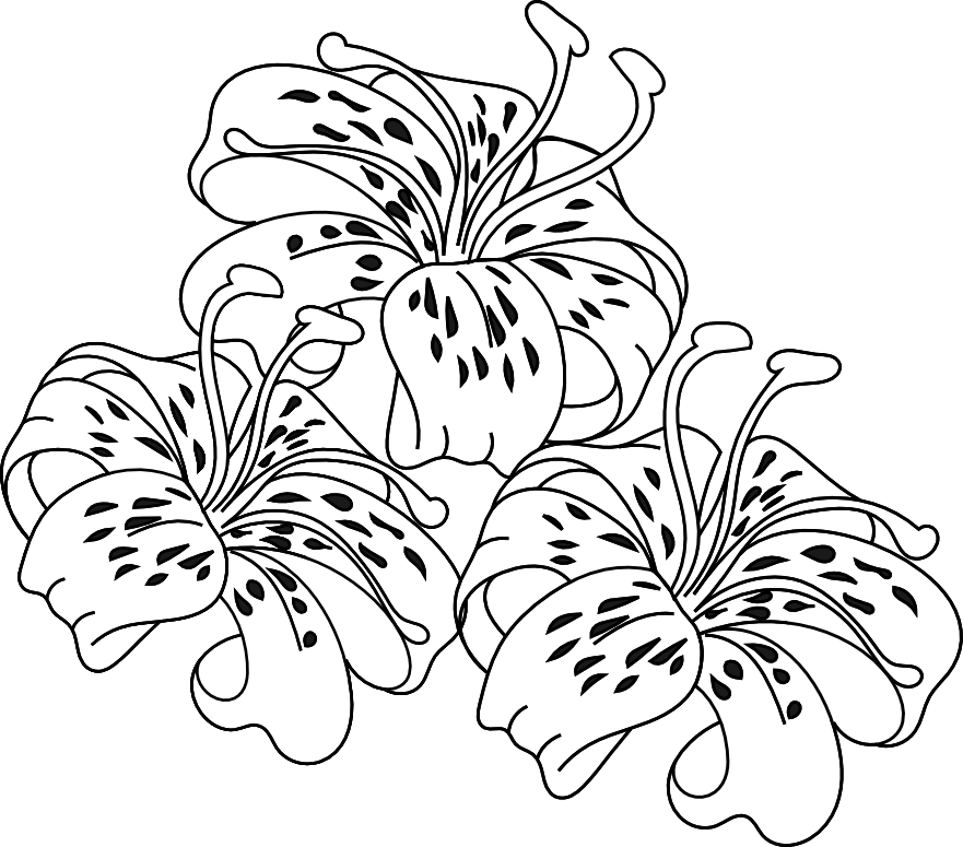 Drawing tigers lilies. Day lily clip art