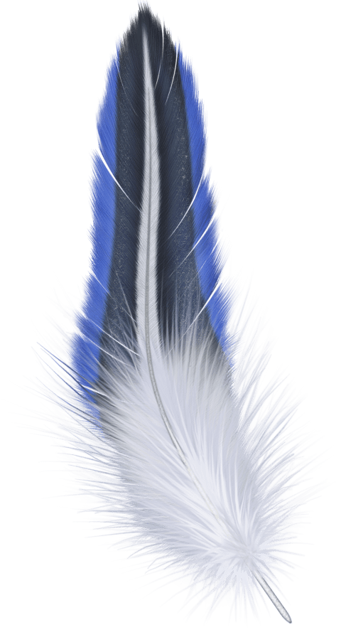 Blue feather png. Free images toppng transparent
