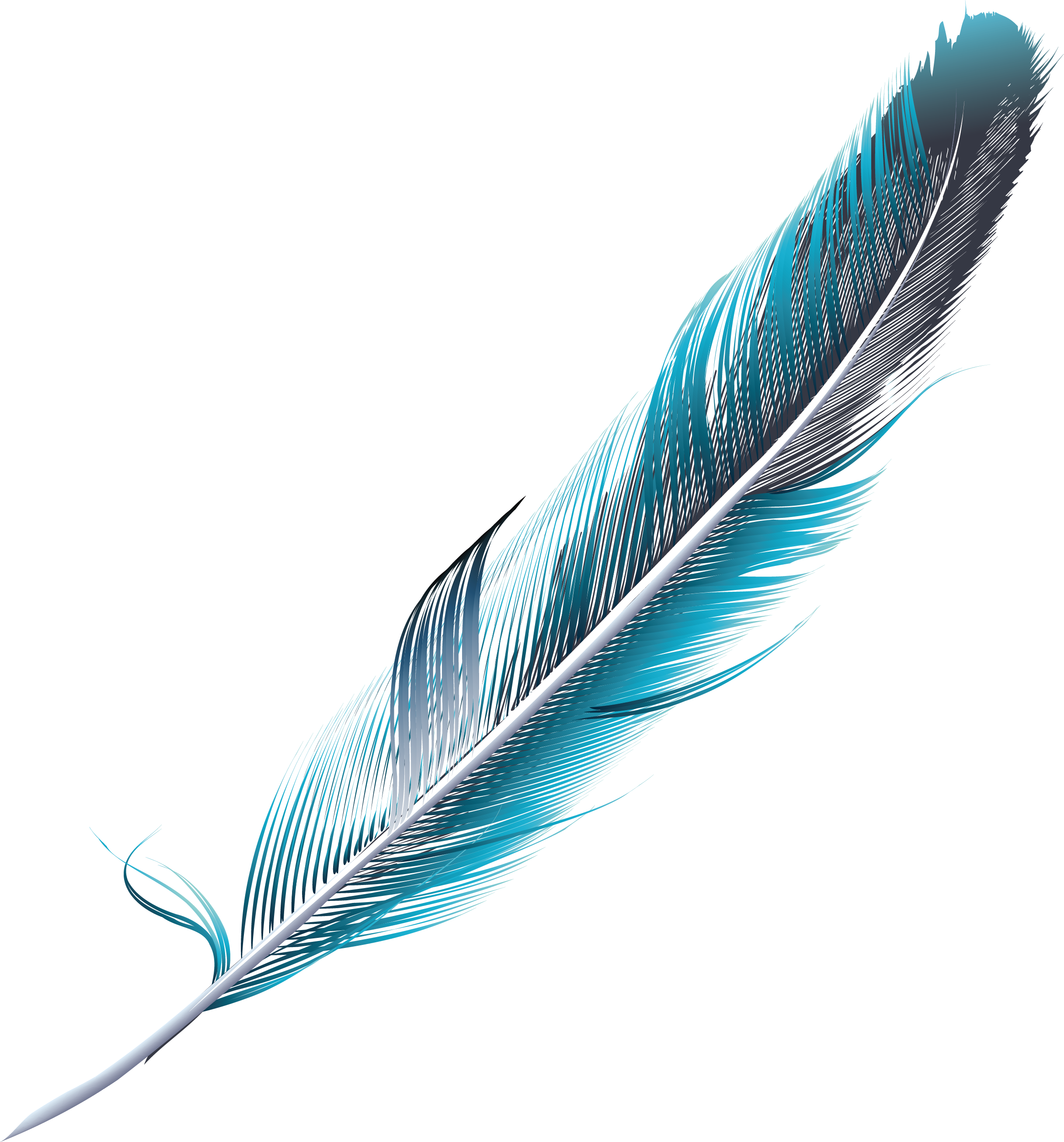 Blue feathers png. Feather green slender bluegreen