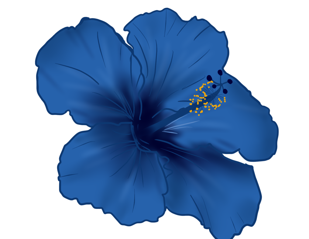 Blue flower png. Hibiscus by shadow ghost