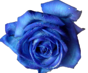 Blue flower png. Images about on
