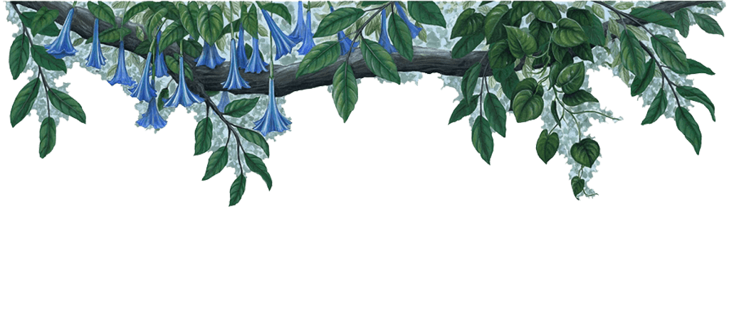 Blue border sticker jungle. Flower wall png banner freeuse download