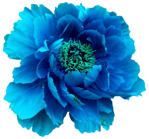 Blue flowers png. Images about flower