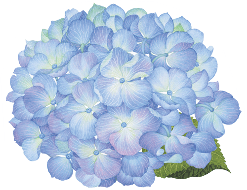 Die cut placemats caspari. Hydrangea transparent picture library download