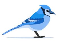 Blue jay. Search results for clip