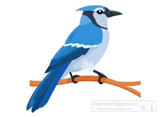 Blue jay. Download for free png