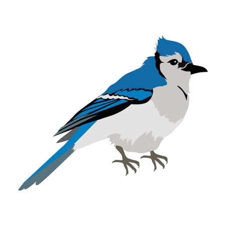 Blue jay. Clipart images in collection