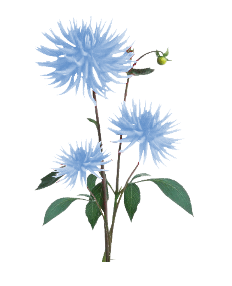 Blue plant png. Showing items to of