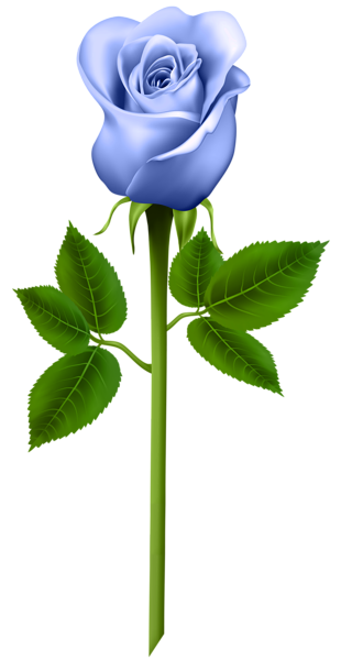 Purple roses png. Pin by rmz on