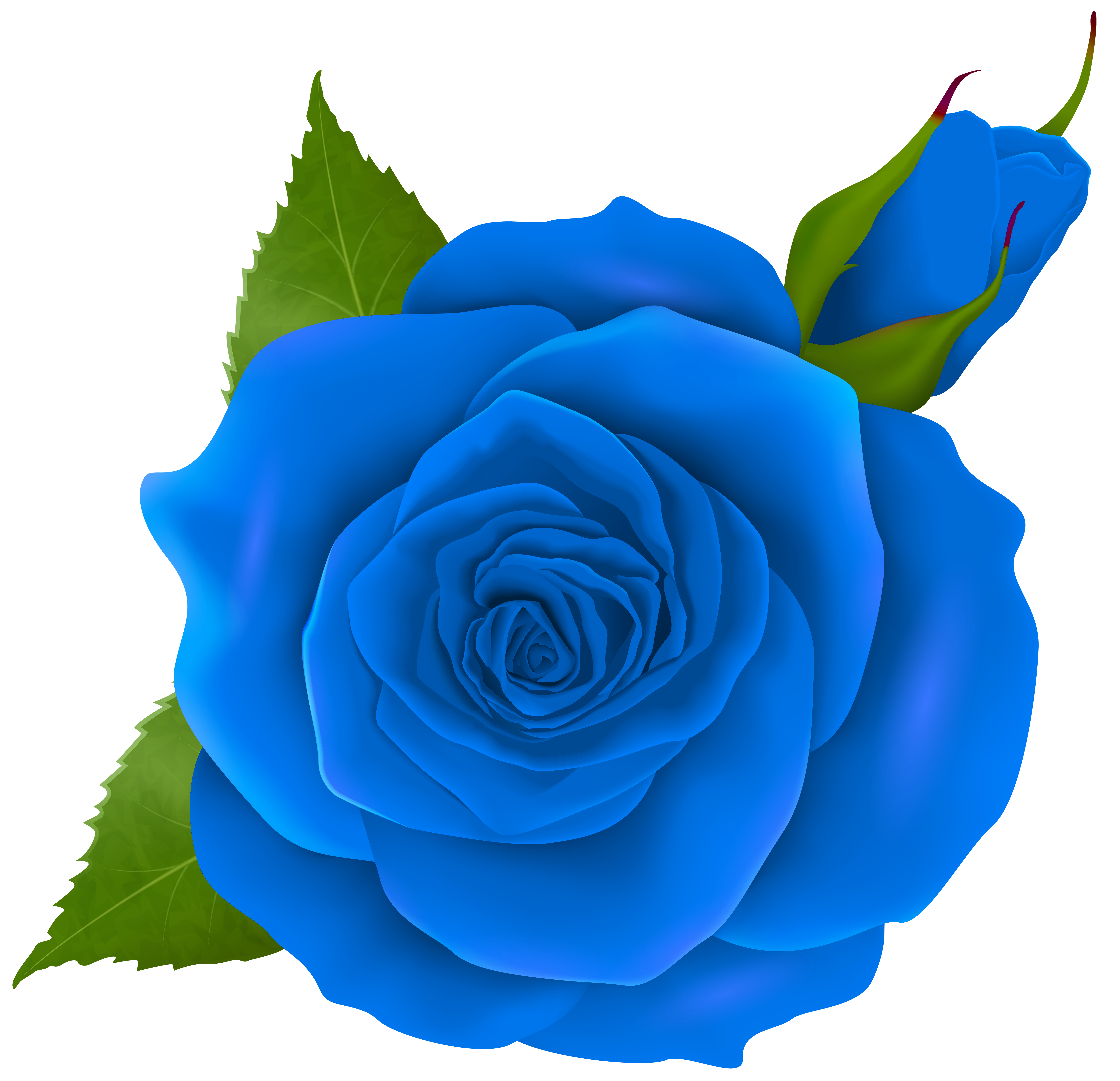Blue rose png. And bud transparent clip