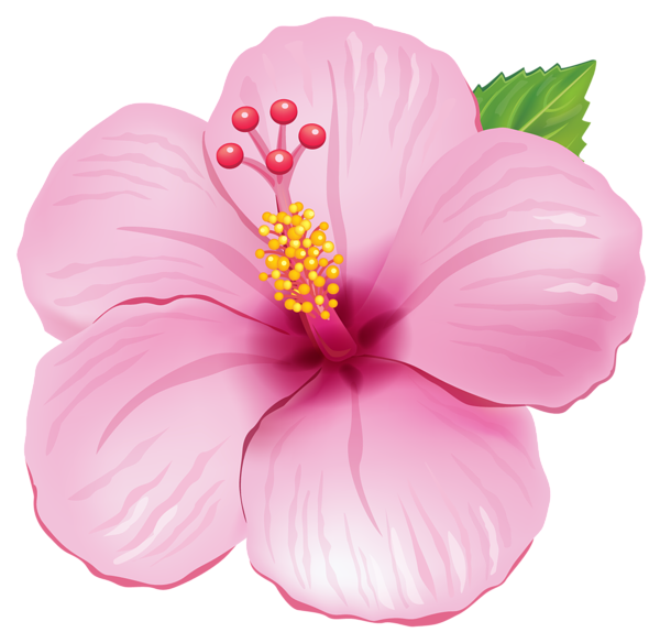 Blue tropical flowers png. Pink exotic flower clipart