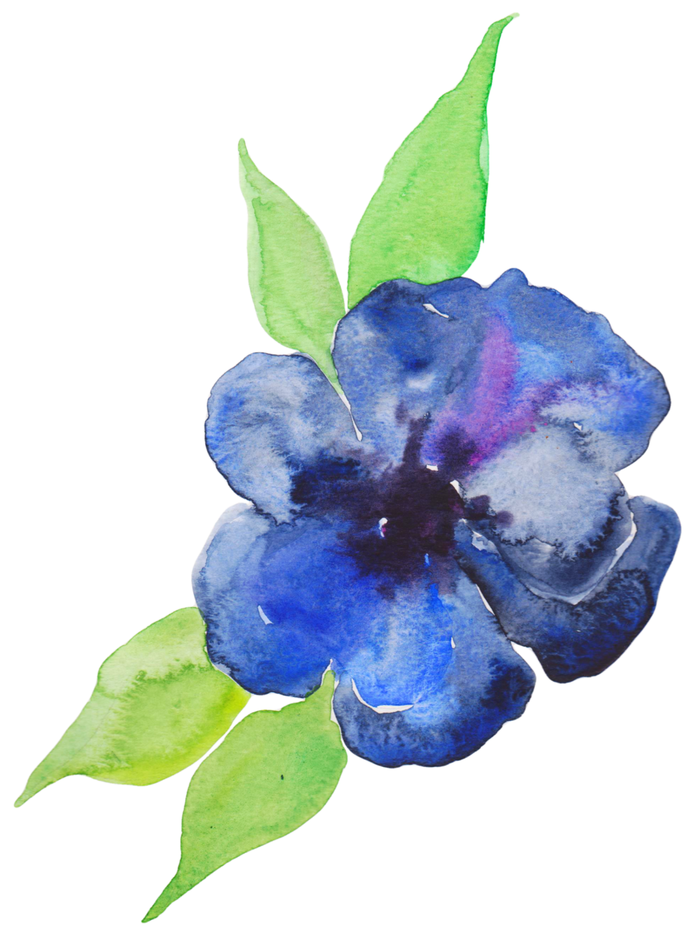 Painting violet purple flowers. Blue watercolor flower png clip art library library