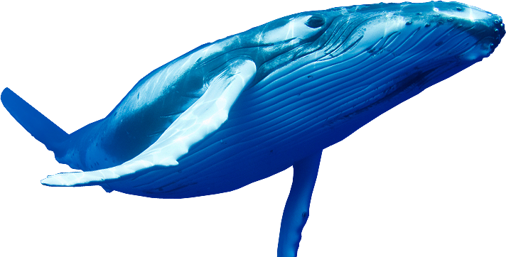 transparent whale fat
