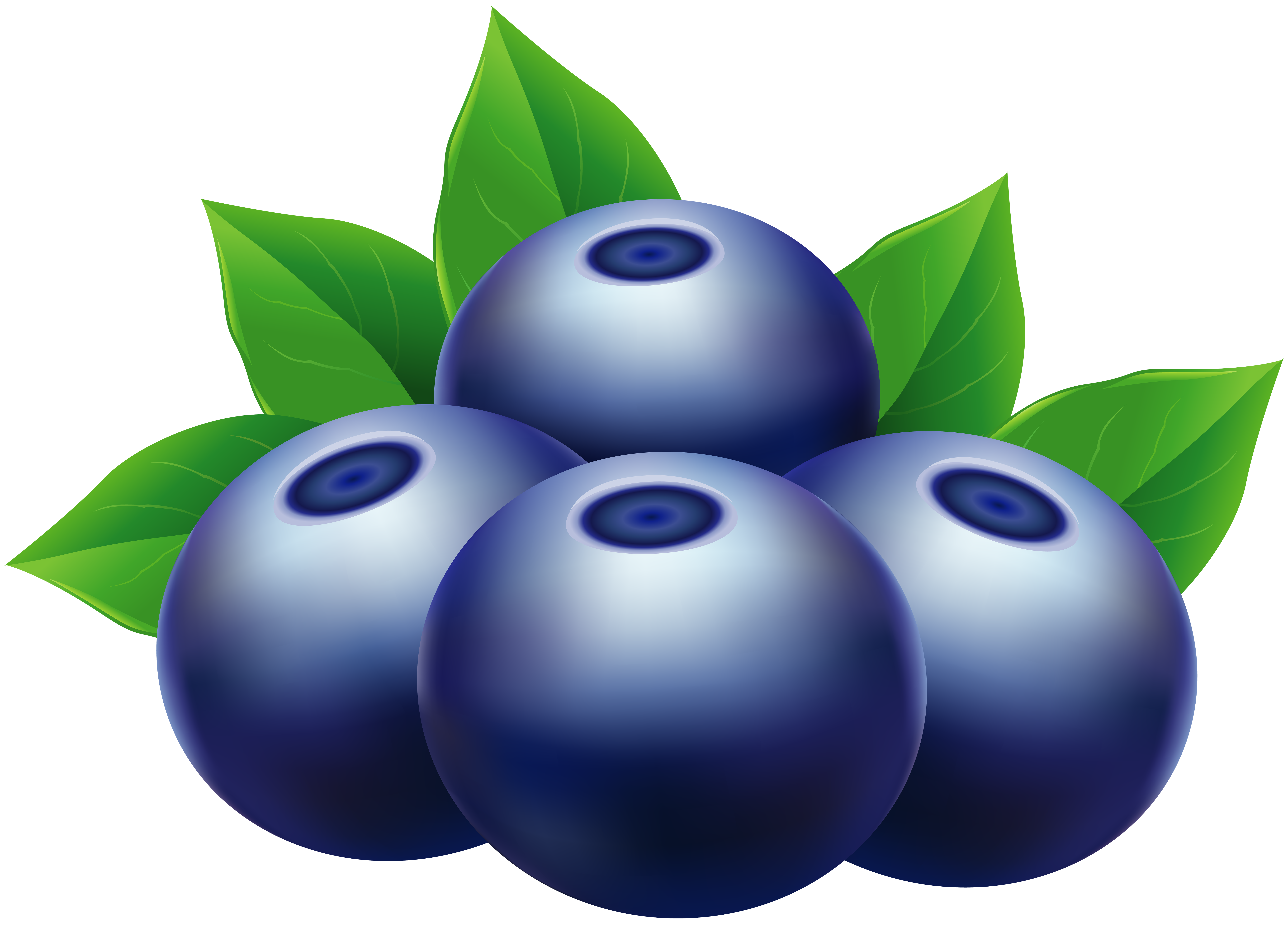 Blueberry clipart huckleberry. Blueberries png clip art