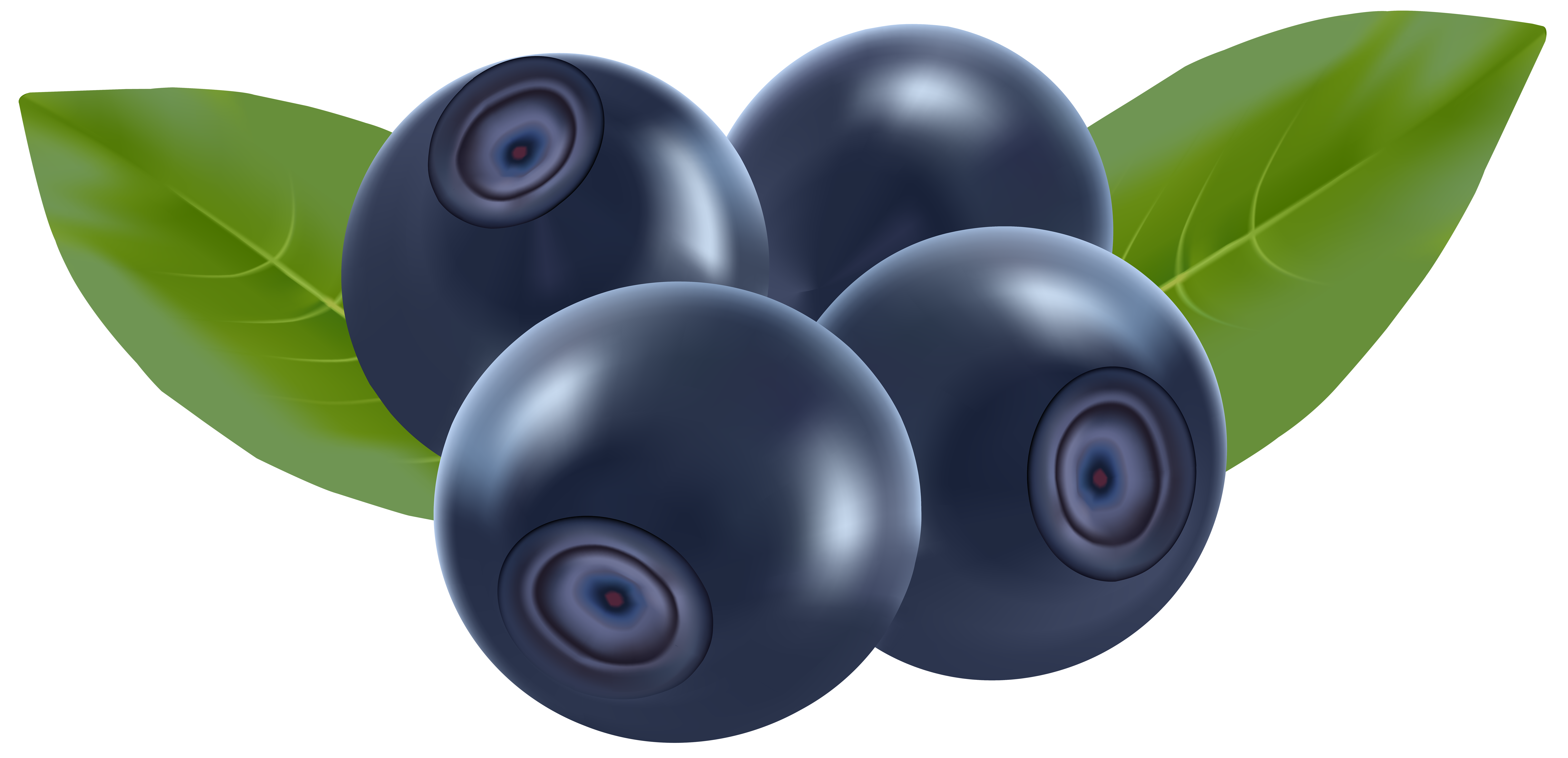 Stroke drawing berry. Blueberries png clip art