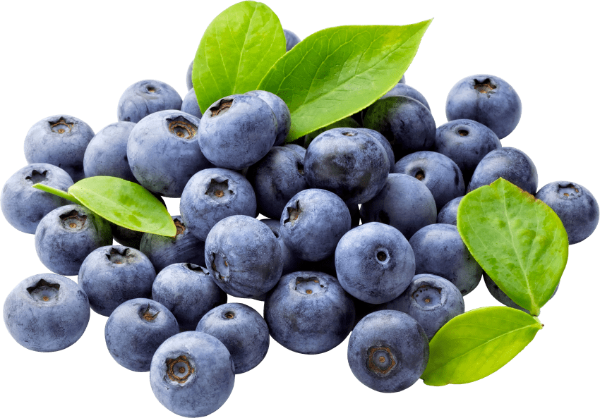 Blueberry clipart huckleberry. Blueberries png free images