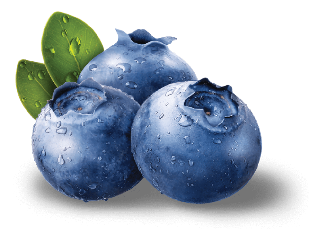 Blueberries clipart one blueberry. Png images free download