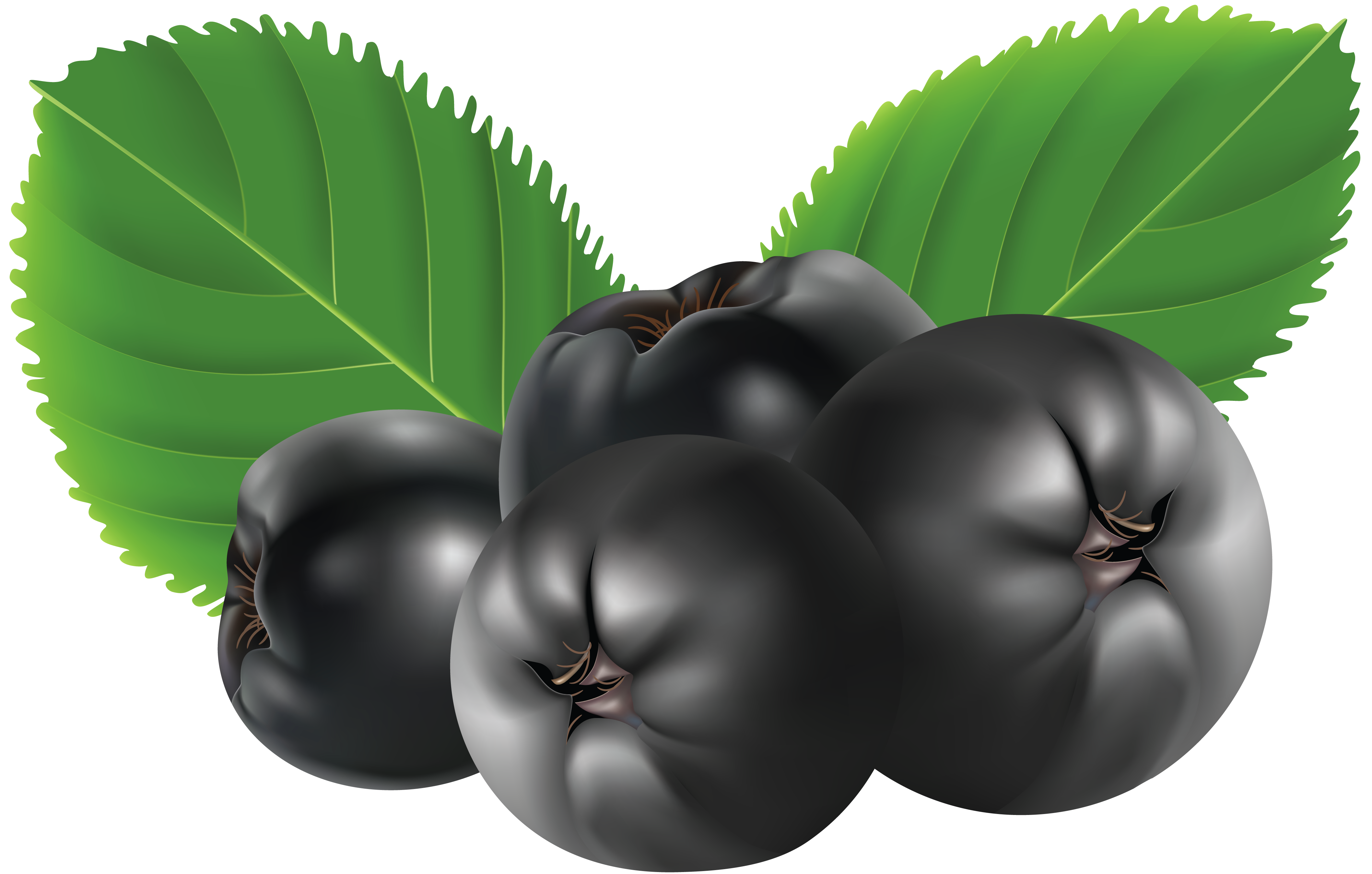 Blueberries clipart transparent background. Blueberry png picture gallery