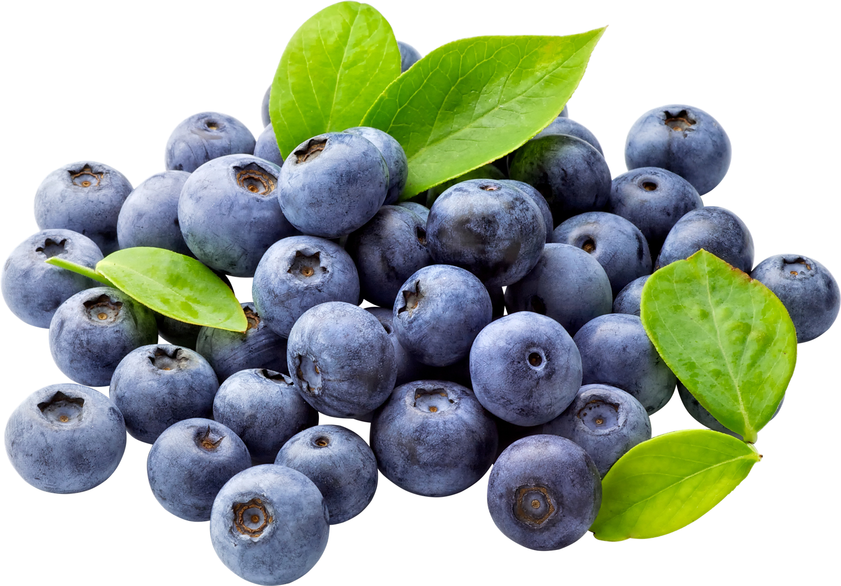 Blueberry clipart huckleberry. Png images transparent free