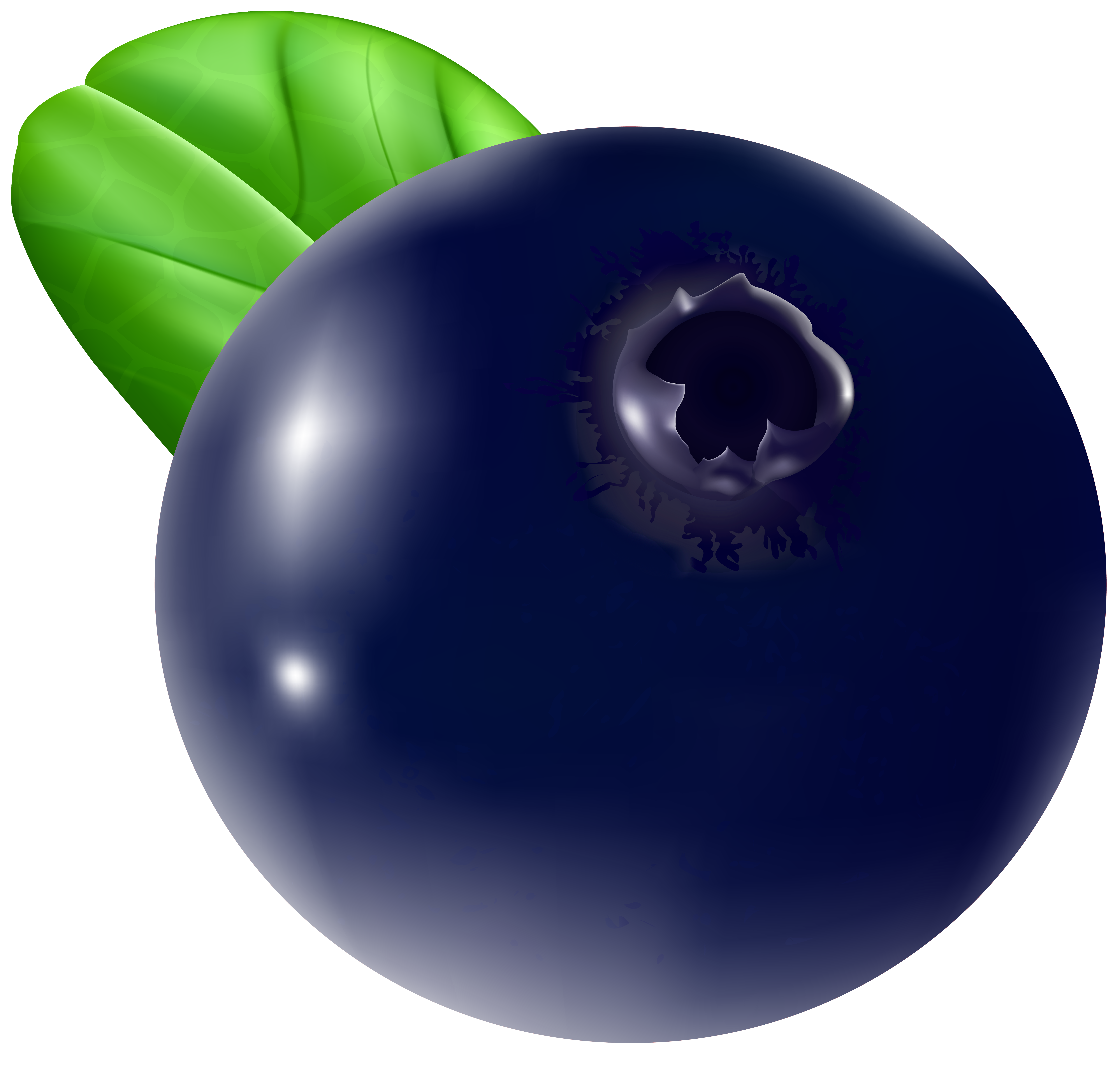 single blueberry png
