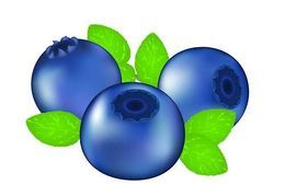 Blueberry clipart. Vector graphics eps clip