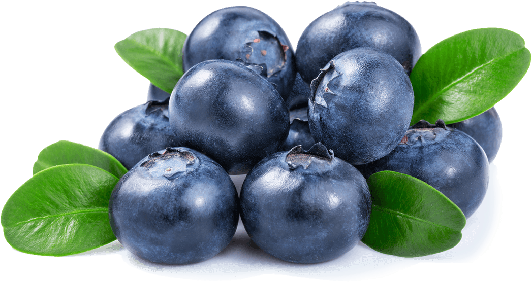 Blueberry clipart huckleberry. Blueberries berries st