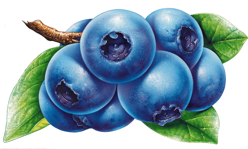 Blueberry clipart huckleberry. Download blueberries png photo