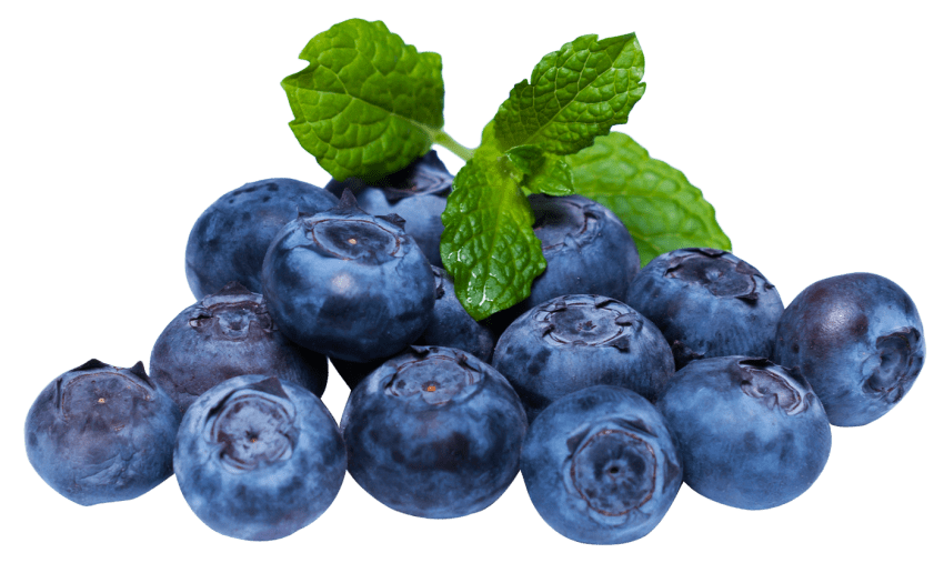 Blueberry png. Free images toppng transparent