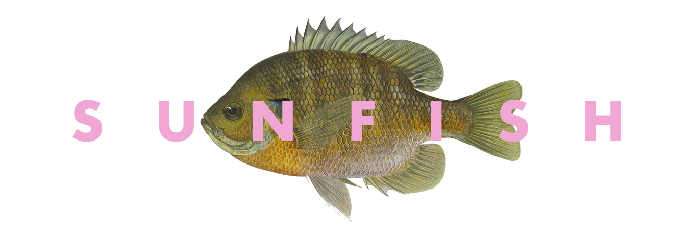 Bluegill drawing simple. Sunfish