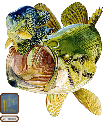 Bluegill drawing simple. Bass and guy harvey