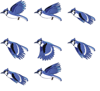 Bluejay drawing easy. D animation tutorial