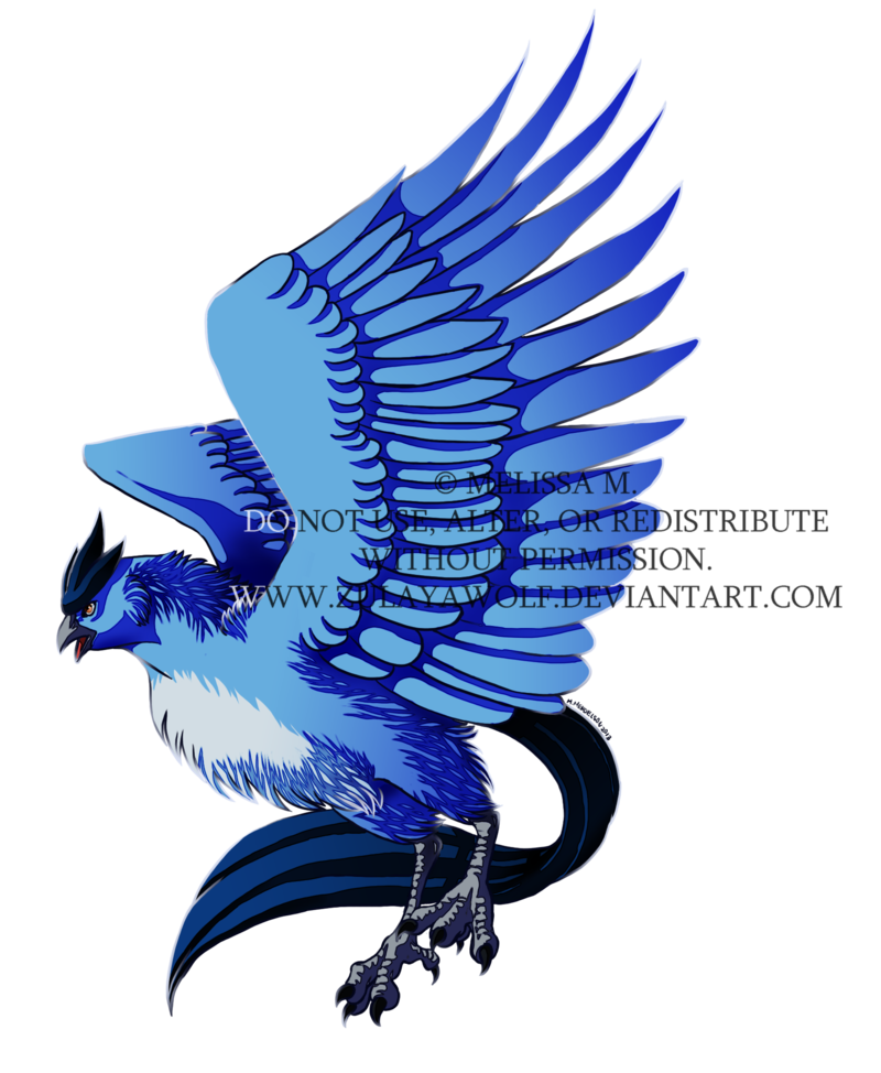 Bluejay drawing wing. Articuno by zulayawolf on