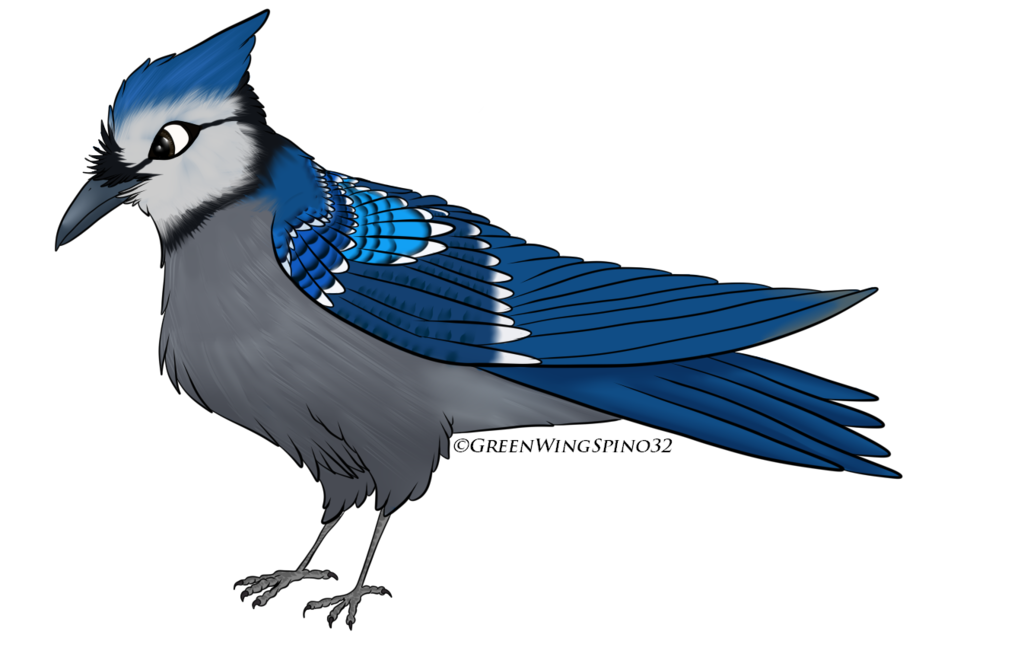 Bluejay drawing wing. Blue jay lotgw style